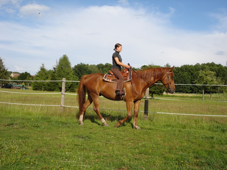 pferd sucht reiter